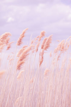 Dreamy Pastel Beach Grass - бесплатный image #286345