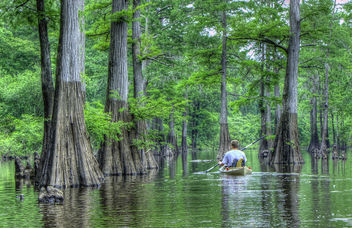 David Kayaking thur the cypress trees in Harrell bayou - бесплатный image #286355