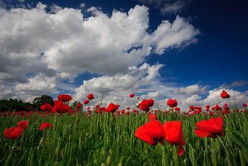 Springtime II - Free image #286405