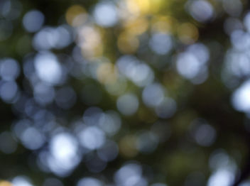 Bokeh Through The Trees - Free image #286795
