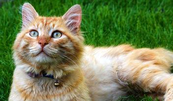 cat - Kostenloses image #286835