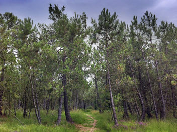 Path In To A French Forest - image gratuit(e) #287005