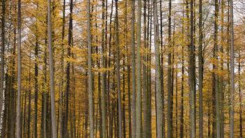 Abstract Autumn - бесплатный image #287145