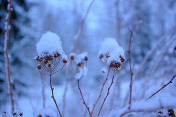 Winter - Kostenloses image #287285
