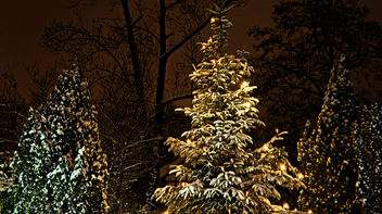 Glowing Christmas Tree Lights in the Winter Night - image #287295 gratis