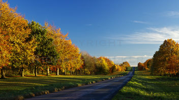Autumn Road - Free image #287915