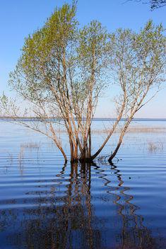 Lake_Burtnieks_flooding_3 - image gratuit #288085