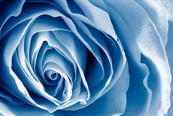 Blue Rose Macro - HDR - image gratuit #288145