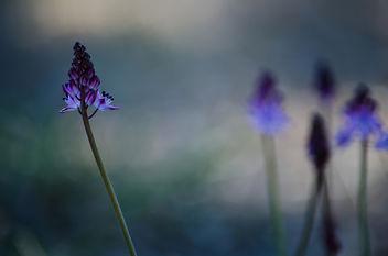 Nature - бесплатный image #289305