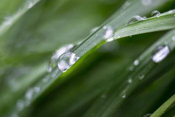 Rain Drop - Free image #289375