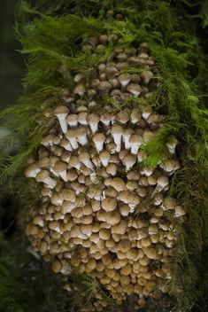 mushroom explosion - Free image #289845