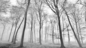 Winter Forest - image #290435 gratis