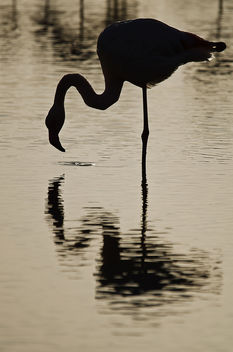 Flamant rose - Kostenloses image #290545