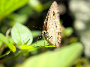 Closeup: Butterfly - Free image #290635
