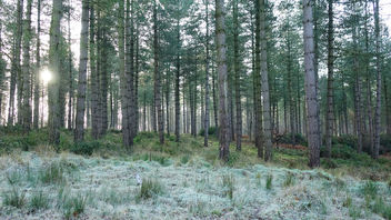 Winter Forest Sony RX10 - image #290665 gratis
