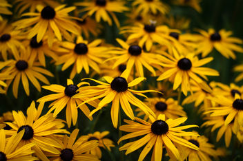 yellow flowers - image #290725 gratis