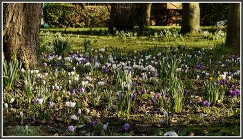 P1150408 Oaks Park 26.02.14 .. - image #291035 gratis