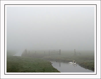 Misty morning - Free image #291165