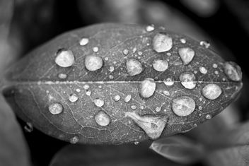 Nature in Black & white - Free image #291405
