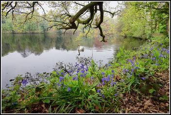 Swan Lake - Free image #291695