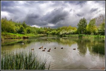 Ducklings - Free image #291915