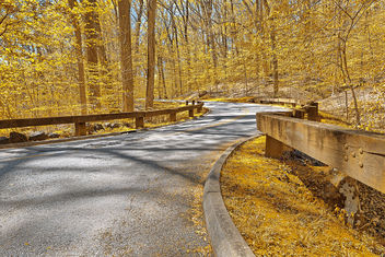 Gold Forest Road - HDR - Free image #292185