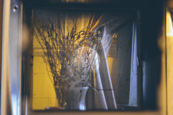 Dead Flowers in the Window. - Free image #292465