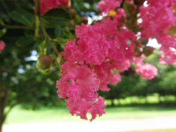 Pink flower Tree - image gratuit(e) #292615