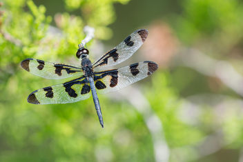 Dragonfly - Free image #292785