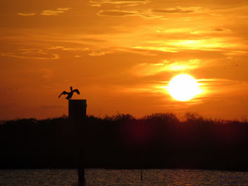 Pelican watching the Sunset - бесплатный image #292815
