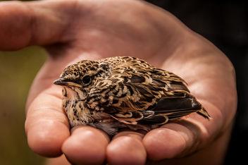 Bird - image gratuit #292915