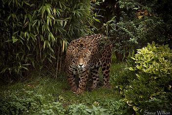 Jaguar - image #293205 gratis
