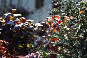 Spider Web - Free image #293885