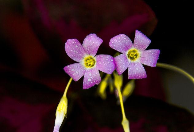 Flowers - image gratuit #293905