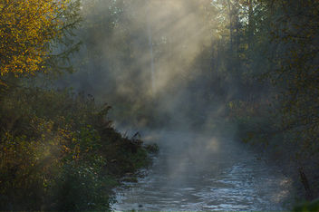 Morning mist - Free image #294125