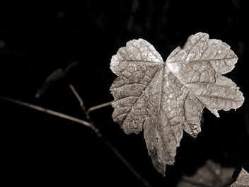 Leaf - Free image #294175