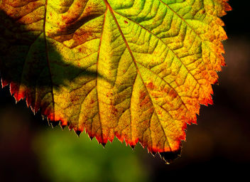 Autumn color in macro.jpg - Kostenloses image #294185