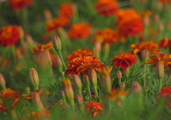 Flowerbed - Free image #294205