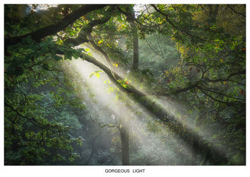 GORGEOUS LIGHT - image #294305 gratis