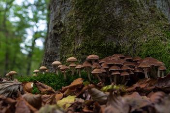 Tiny Garden - бесплатный image #294395