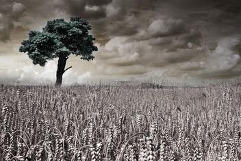 Lone Tree - Free image #294965