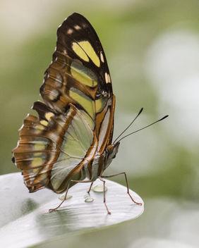 Schmetterling - Butterfly - image #295455 gratis