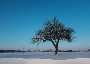 On a winter day... - Free image #295505