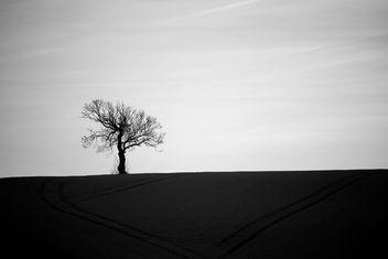 Tree - Free image #295605