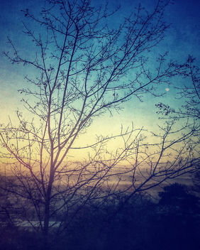 Tree - Kostenloses image #295715