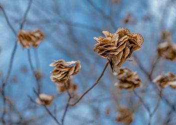 Tree Seeds - Kostenloses image #295875