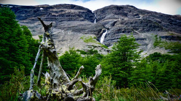 Dead Tree - Free image #295905