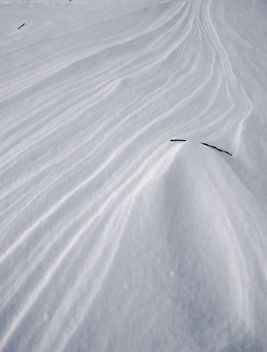 Stick in Snow - image #296075 gratis