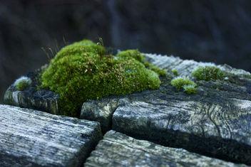 Moss & Wood - Free image #296125