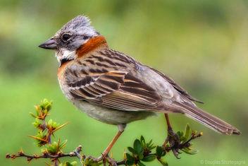 A bird - Free image #296175
